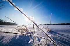 Frost (Markus Grasser) Tags: frost franken fränkischeschweiz franconia oberfranken olympus ice himmel sonne eiskristalle schnee winter