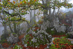 Misty forest (Hector Prada) Tags: bosque hayedo niebla otoño naturaleza arboles atmosfera paisvasco forest mist fog misterious autumn leaves nature trees magic hectorprada basquecountry