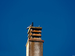 Recorriendo las instalaciones (Luicabe) Tags: airelibre animal arquitectura ave cabello chimenea edificio enamorado exterior luicabe luis naturaleza paloma yarat1 zamora ngc