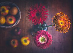 colourful gerberas (gian_tg) Tags: apples depthoffield flowers gerbera colourful stilllife shotfromabove maketheworldmorecolorful crazytuesdaytheme 7dwf vase pink red gold yellow