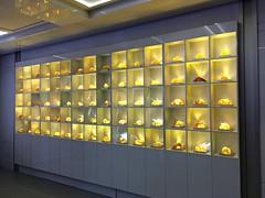 The wall of amber (nutzk) Tags: franklin institute philadelphia pennsylvania science dinosaur jurassic amber
