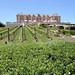 Domaine Carneros Vineyards & Winery, Sonoma Valley, California, USA