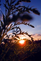 An In-between Setting Sun (MooziX) Tags: sunset summer plants blur clouds warm dusk horizon warmth blurred
