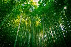 130223-008.jpg (seiichi.nojima) Tags: japan forest woods bamboo neighborhood shizuoka jpn kuniyoshidasurugakushizuoka kuniyoshidasurugakushizuokashi