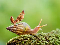 IMG_1770 (thienbs) Tags: macro mantis thienbs