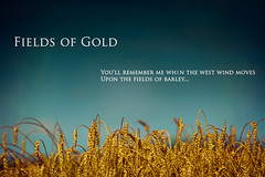Fileds of Gold (JGo9) Tags: sky barley rural ky wheat sting harvest fieldsofgold