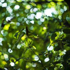 World of Bokeh (kaspars1985) Tags: uk light tree green leaves photoshop nikon sunny ps iso m42 f2 manual lovely fullframe nikkor curve fx tones 58mm manualfocus helios d600 nikcolor uploaded:by=flickrmobile flickriosapp:filter=nofilter