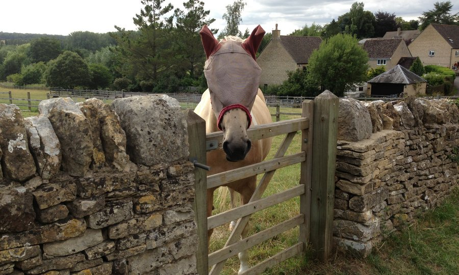 Лошадь в деревне Чарльбери
