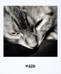 "#DailyPolaroid of 11-8-13 #326 • <a style=""font-size:0.8em;"" href=""http://www.flickr.com/photos/47939785@N05/9536742253/"" target=""_blank"">View on Flickr</a>"