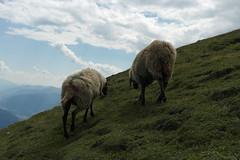 Nordkette Innsbruck (Sascha Klauer) Tags: innsbruck alpen nordkette bergstation hafelekarel pfeishütte alm alp arzler scharte wandern schotter felsen gebirge berge inn österreich gipfel berghütte almhütte schafe austria tiere animals