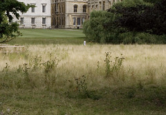 meadow to lawn (Wendy:) Tags: cambridge fence lawn meadow pasture kingscollege punting punter