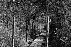 (Sameli) Tags: bw white black nature suomi finland landscape helsinki