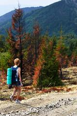 travel girl (Dima Viunnyk) Tags: wood travel woman mountain tree pine walking hiking