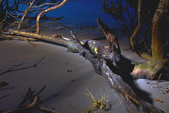 """This Old Tree!"" (TonyinAus) Tags: wood old lightpainting tree water canon australia driftwood rivers"