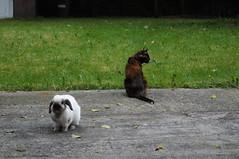 Moko and Rugrat (deceased) (Tjflex2) Tags: boy pets canada cute rabbit bunny bunnies girl vancouver cat mammal furry bc friendship fuzzy conejo small adorable rory cuddly coelho playful moko lapin usagi krolik kanin rugrat toki lagomorpha leporidae lepus fenek iepure muyal kelinci ilconiglio coinin sungura leporidea
