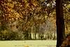 Falling Leaves (jayneboo) Tags: wood autumn trees leaves shropshire falling odc2