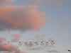 golau light (the incredible how (intermitten.t)) Tags: light sky star gulls ceredigion cardigan seren aberteifi golau 18996 20131209