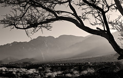 In Wadi Araba, Jordan (Miche & Jon Rousell) Tags: blackandwhite bw tree desert dry jordan wadiaraba
