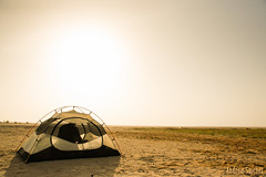 Waking up in Sultanate of Oman (Andreas Sanchez) Tags: insect desert tent oman insekt insecte entomologie entomology coleoptera sultanate coloptre