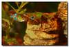fishy (BobButcher) Tags: fish guppies endlers