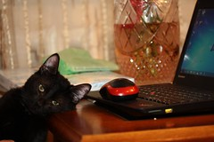 Tom and Jerry. :)) (halina.reshetova) Tags: red brown white black green animals cat canon computer eyes kitten bouquet fatigue glance cateye cathair netbook tomandjerry computermouse catsnose whiskerscat nosecat canoneos1000d vision:sunset=065 04032014 attentivelook