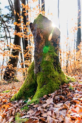 Sunny Tree Stump