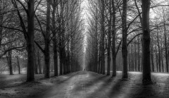 Allee in Hannover