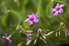 Primavera III (Andrés Entero) Tags: flowers flores macro primavera canon eos bokeh 7d lilas 24105l