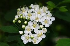 Enelas (Jaan Keinaste) Tags: nature spring estonia pentax eesti loodus kevad k7 enelas pentaxk7 vaskjala
