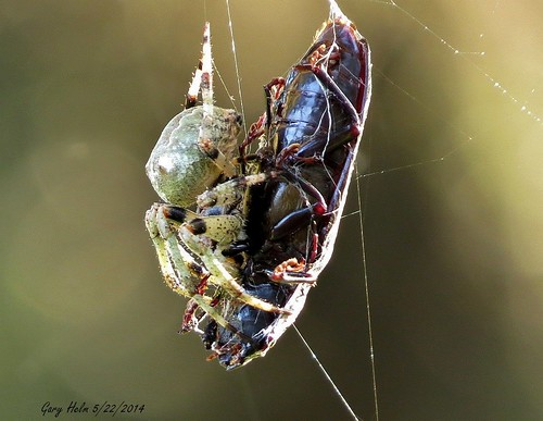 Web Beast image