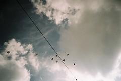 Chasing the perfect flock photo (knautia) Tags: uk england film birds bristol pigeons flock olympus ishootfilm 200iso bedminster myfavouritefromtheroll april xa wheeling olympusxa 2014 chessels xaroll9