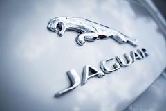 Jaguar (Renatas Repinskas Photo) Tags: white logo fast lap xjs jaguar lithuania etype xkr xj8 xj xj12 2014 xj6 xf xk stype xj40 xk8 xjr ftype xjsc mk||