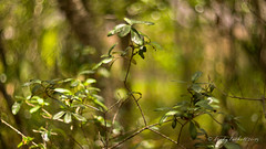 Schwarzer Wald (brady tuckett) Tags: trees plants macro tree green nature leaf flora bokeh m42 brady tuckett helios leav helios40285mmf15 bradytuckett