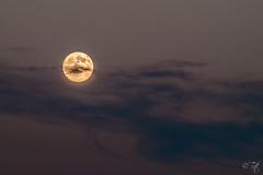 Moon ((`._.TaTiTeCtE._.)) Tags: