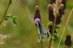 Butterfly at Fulford Community Orchard