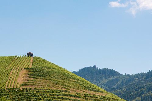 Vignes à Gengenbach