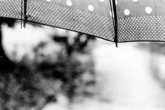 Umbrella (Trcio Campelo) Tags: street blackandwhite film rain umbrella nikon dof bokeh trix streetphotography kodaktrix f80 f18 nikonf80 streetphotographer filmisnotdead kodaktrix400800 believeinfilm
