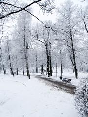 Winter in Arkadia park