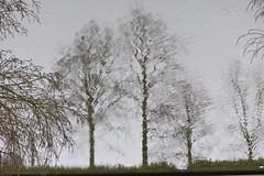 Spiegelung im Wasser (Jojorei) Tags: spiegeln spiegelung wasser water reflection reflections mirror spiegel grey grau noir tree trees baum ast branches paint painting gemalt looks art kunst design spiegelbild