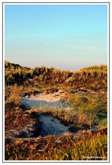 Callantsoog, Holland (DirkJan Ranzijn Photography) Tags: holland nederland netherlands duinen zee water dunes sea beach summer zomer nikon nikond300 beautiful
