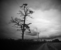 136 - Stark - 17th May 2013 (Trev Earl) Tags: trees blackandwhite art monochrome buckinghamshire 5d classicbike