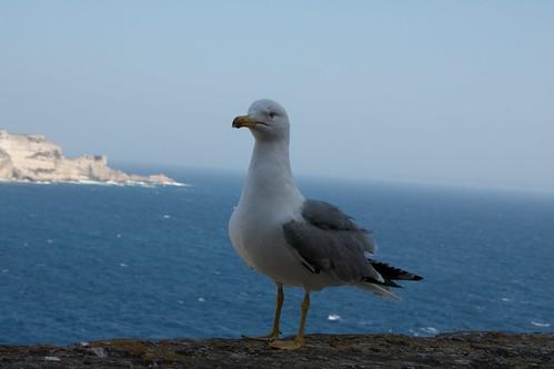 "Bonifacio Korsika - 2 <a style=""margin-left:10px; font-size:0.8em;"" href=""http://www.flickr.com/photos/64662496@N00/9073284117/"" target=""_blank"">@flickr</a>"