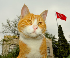 Concerned cat at Istanbul University, Turkey, October 4, 2009 (Ivan S. Abrams) Tags: turkey istanbul istanbuluniversity beyazit ivanabrams