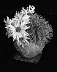Bouquet Remnants (Flickr Goot) Tags: flowers light blackandwhite bw white black flower kitchen daisies canon eos high counter dynamic august daisy vase range chrysanthemum highdynamicrange available countertop tonemapped tonemapping 2013 tonemap 60d 52weeksproject