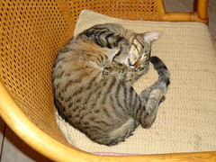 DSC09940 Gri-Gri dormindo na cadeira (Johannes J. Smit) Tags: cat kat chat gato katze gatto