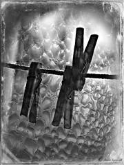ακομη και το μακρυτερο ταξιδι, ξεκιναει με το πρωτο, μικρο βημα ✌ (Love me tender ♪¸.•*´¨´¨*•.♪¸.•*´) Tags: blackandwhite blur monochrome photography dof bokeh september textures greece automn clothespins dimitra peloponnisos 2013 neaepidavros dimaina mygearandme nikond3100 flickrstruereflection1 kirgiannaki