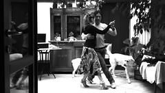 TANGO ARGENTINO TANGOLPE elenaypil 2013... CASA (T A N G O L P E) Tags: italy puppy casa labrador milano il tango elena passion rosso bergamo amore nuevo comme scarpe spettacolo tangoargentino faut pil monza rota argentino passione milonga abbraccio precise cuccioli milonguero commeilfaut esibizione tanguero giocando rotaimagna elenarota tangolpe martinotti tangolpeprojet elenapreciserota pilmartinotti