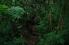 in the forest (Joseph Tarigan) Tags: ex forest dc pentax 14 sigma jungle k5 30mm