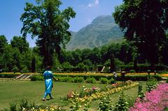 Mughal Garden, Kashmir (scuba_dooba) Tags: terraced mughal garden nishat baghdal lake srinagar north india jammu kashmir himalaya mountains plustek 7200dpi reel1 vuescan wolf faust flower grass tree mogul 1987 shalimar bagh