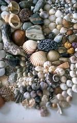 Shells (Joybot) Tags: shells film 35mm 50mm treasure stones arrangement fujica arranged beachcombing beachcomber colorprint colourprint stx1n
